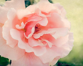 Girl Nursery Art - Just Joey Rose Print - Soft Pink, Peach - 11x14, 16x20 Nature Photo - Dreamy Summer Flower Picture - Rose Photography