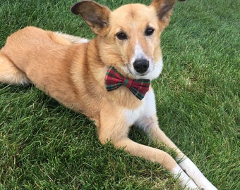 Traditional Red and Green Plaid dog bowtie Christmas Dog Accessory