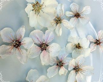 Dried flowers, Apple tree flowers, Cherry blossoms, Sakura, Flowers for decor, Scrapbooking, Floristics, White flowers, Bouquet flowers