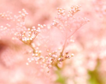 Pink Flower, Dreamy Photography, Macro Flower Photography, Digital Download, Do It Yourself, Printable Art