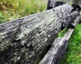 Fence Photography. Green and Gray Art Print Wall Decor. Nature Print. Unframed Photo Print, Framed Photography, Canvas Print. Home Decor.