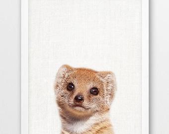 Mongoose Photo Print, Mongoose Print, African Safari Animals Art Photo, Nursery Animal Wall Art, Animals Color Photo, Kids Room Printable