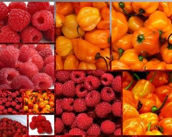 Raspberry Habanero Jam Hot Pepper Homemade
