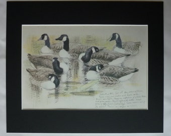 Vintage Charles Tunnicliffe Print of Canada Geese, Nature Gift, Country River Decor, Available Framed, Bird Art, Canadian Goose Wall Art