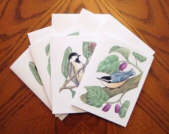 Bird Note Cards - Birds - Chickadee - Nuthatch - Set of 4
