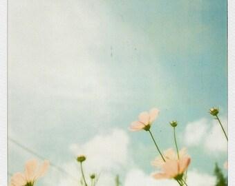 Polaroid Photograph, Polaroid Photo,  Cosmos Flowers, Flower Photography, Nature Photography, Vintage Film Photo, Fine Art Photograph