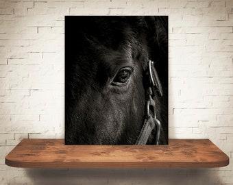 Horse Photograph - Fine Art Print - Black White Photography - Equine Wall Art - Wall Decor -  Horse Pictures - Farmhouse Decor - Horses