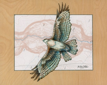 Hawk art on topography map, Archival print, wildlife illustration, animal print, Bird Painting, wall art Hawk illustration, bird art