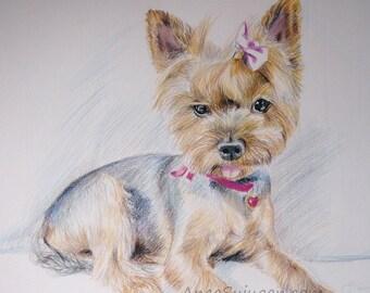 Pet portraits, custom hand drawn, dog portrait sketch, from photographs