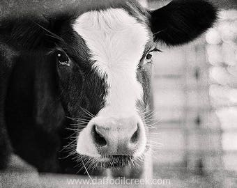 Cow Photography, Black and White Photo, Country Decor, Kitchen Wall Decor, Rustic Wall Art, Farmhouse Decor, Black and White Print, Cow Art