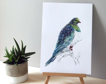 Kereru bird, New Zealand native Wood pigeon illustration, Large print from original watercolor and ink painting, Wild life Kiwiana art
