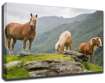 HAFLINGER HORSE - Avelignese - Mountains in Background - Canvas/Poster Wall Art Pin Up HD Gallery Wrap Room Decor Home Decor Wall Decor