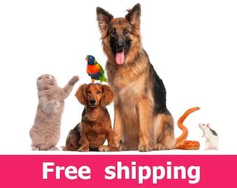 animals wall sticker, animals wall declas: cat wall sticker, dog wall sticker, bird wall sticker, snake wall sticker, mouse sticker [img106]