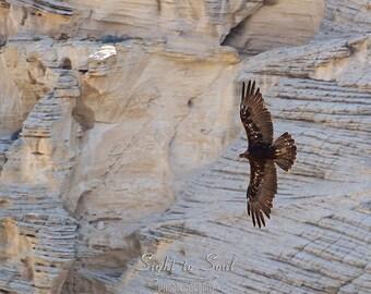 Golden Eagle Photo, wild bird photography, southwestern décor, bird lover gift, wildlife photography, birds of prey