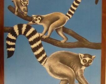 Original Vintage ring-tail lemur Poster 1970s - Original Berlin Tierpark Zoo Poster - Rare original East German authentic Madagascar  poster