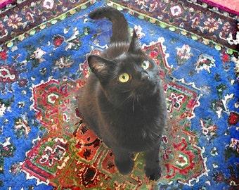 Cat Card, Black Cat Art, Photo Note Cards, Blank Cards, Note Cards Handmade, Cat Lover Gift, Deborah Julian