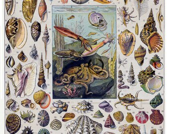 VINTAGE SEASHELLS Print. Digital Seashells Download. French Dictionary Chart MOLLUSKS. Sea Shells Collage Sheet.