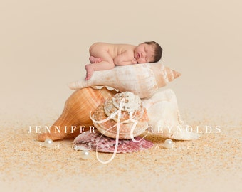 Stack of Shells Backdrop, Sea Shell Digital Prop, Beach Backdrop, Background for Newborn Photography