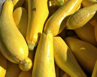 Early Prolific Straightneck Heirloom Summer Squash Seeds Non-GMO Naturally Grown Open Pollinated Heirloom Gardening