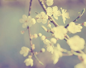 Spring Blossom Photography, Pale Blue, Cherry Blossom, Pastel, Dreamy Wall Art, Nature Decor, Shabby Chic, Mothers Day - Tender Beginnings