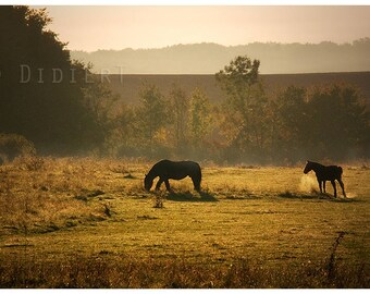 Color photo print: horses in a meadow