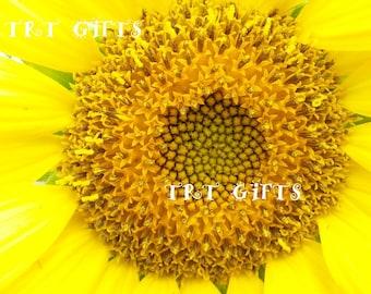 Halfway There!  Sunflower in bloom *Digital Download*