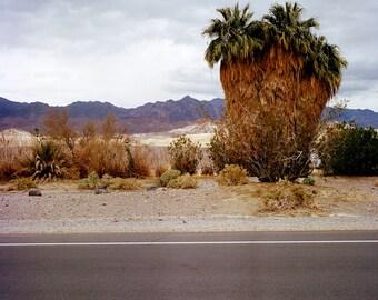 Trio de palmiers - Death Valley California