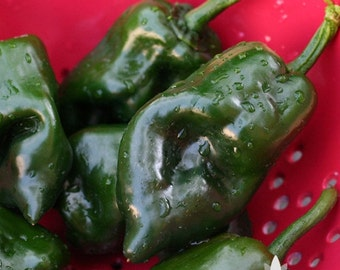 Poblano Ancho Hot Pepper Heirloom Seeds - Non-GMO, Open Pollinated, Untreated