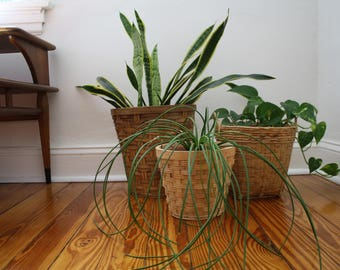 A Wicker Basket Planter