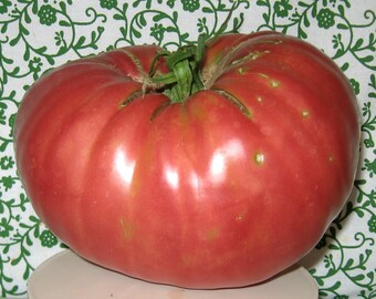 Hoy Heirloom Giant Tomato Seeds