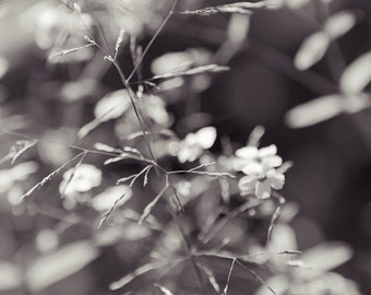 White Flower Photography, Rustic Flower Art, Wildflower Photograph, Abstract Botanical Photo, Prairie Grass, Whimsical Photography, August