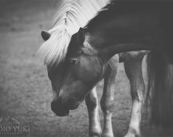 Horse Photography, Black and White, Equine Art, Fine Art Photo, Farm, Rustic, Animal, Archival Print, Nature, Horses Wall Art, Valentines
