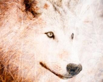 Wolf Fine Art Wall Decor Photo - Textured Wildlife Art Home Decor - Color Animal Photography