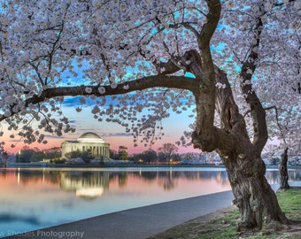DC Cherry Blossom - Washington DC Print - Cherry Blossom Festival - Jefferson Memorial - Washington DC Fotokunst, Sunrise