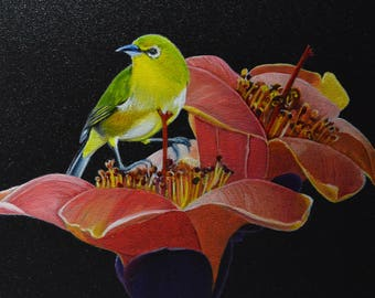 Mejiro - Japanese white-eye and kapok flowers - Zosterops japonicus - Oil painting on wood -  Contemporary naturalism
