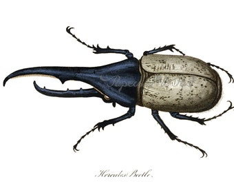 Antique Hercules Beetle Print Instant Download | Printable Art | Entomology Insects Insect Beetles Paper Crafts Scrapbook Natural History