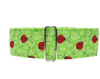 Ladybug Martingale Collar, 2 Inch Martingale Collar, Greyhound Martingale, Lime Green Dog Collar, Preppy, Martingale Dog Collar
