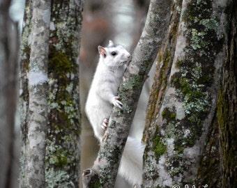 Squirrel, Squirrel Photography, White Squirrel, Odd Squirrel,Nature photography, Wildlife Photography, Wall Art, home decor