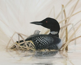 Loon with Baby - Lithographic Print