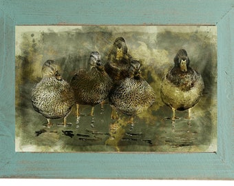 Ducks in Puddle