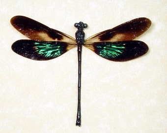 Dad's And Grad's Gift Real Framed Metallic Green Patch Damselfly Dragonfly 7709