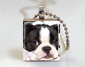 Boston Terrier Puppy Dog - Scrabble Tile Pendant - Free Ball Chain Necklace or Key Ring