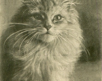 French PERSIAN Cat Digital ILLUSTRATION. Digital Cat Download. Vintage Cat Print.
