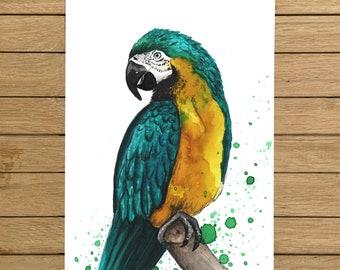 "Macaw, Tropical Bird, Birds, Giclée Print, Watercolor Illustration, Home Decor, Nursery Decor, A5, 8.5""x11"", A4, A3, 13""x19"