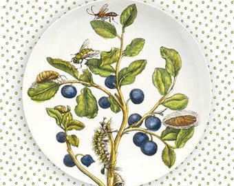 Blueberries plate