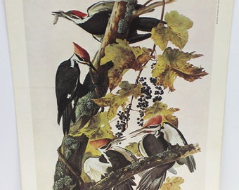 vintage woody woodpeckers image,bird image,vintage bird image,woodpeckers image,home decor,man cave gift,man gift