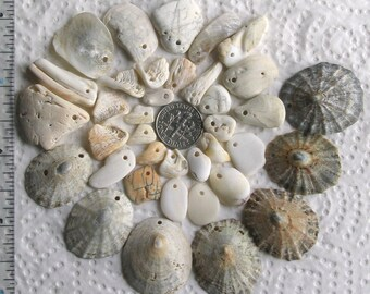37 Sea Shells Shell Fragments Top Drilled 1.2mm holes Supplies (1922)