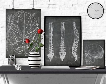 Anatomical Brain Printable, Doctor Office Art, Vintage Medical Illustration, Brain Poster, Instant download, Chalkboard Anatomy, Nurse Art
