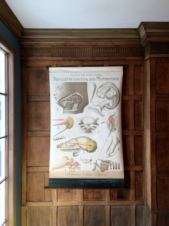 Antique Pull Down Chart, Squelette Visceral Des Mammiferes, Collection Remy Perrier & Cepede, Medical Art, Anatomical Chart