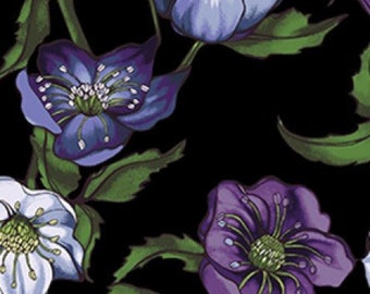 Lenten Rose Black Y2278-03